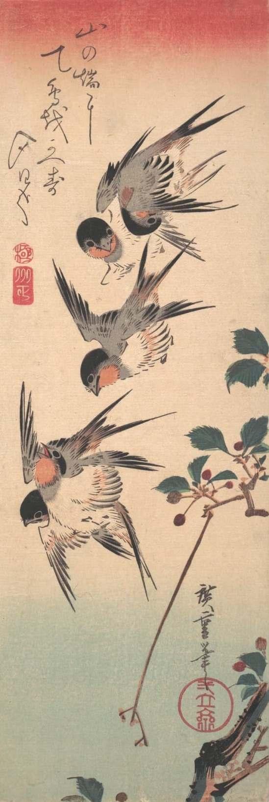swallows-5